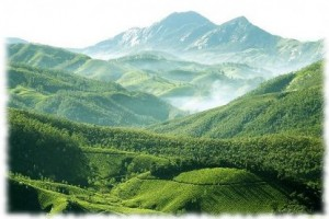 munnar-honeymon-packages-hotels
