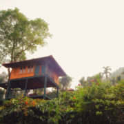 Marmalade tree house