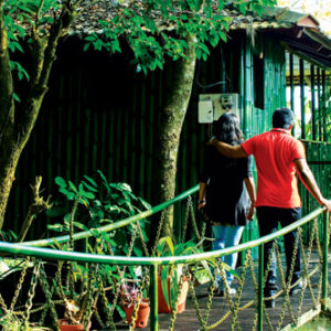 tree house at wayanad hills