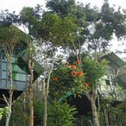 Tree house wayanad outer view