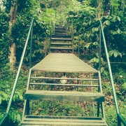 walkway to treehouse