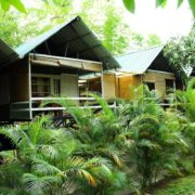 Wild tusker elevated cottages