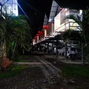 Wild tusker night view