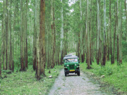 Safari in Muthanga wildlife santuary