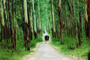 safari in wayanad wildlife sanctuary